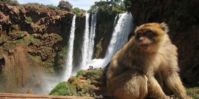 Ouzoud waterfalls excursion from Marrakech